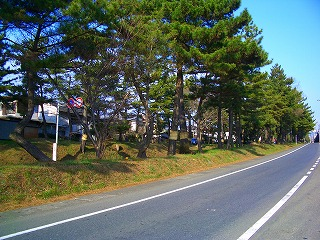 国道1号の松並木