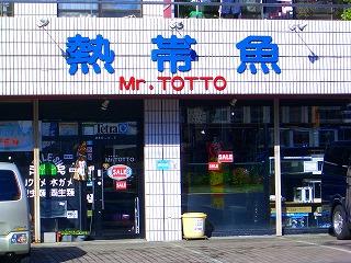 熱帯魚 Mr. TOTTO